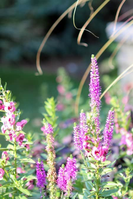 Purple and Pink Flowers in the BHG Outdoor Garden