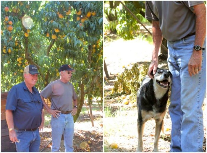 Peach Farmers