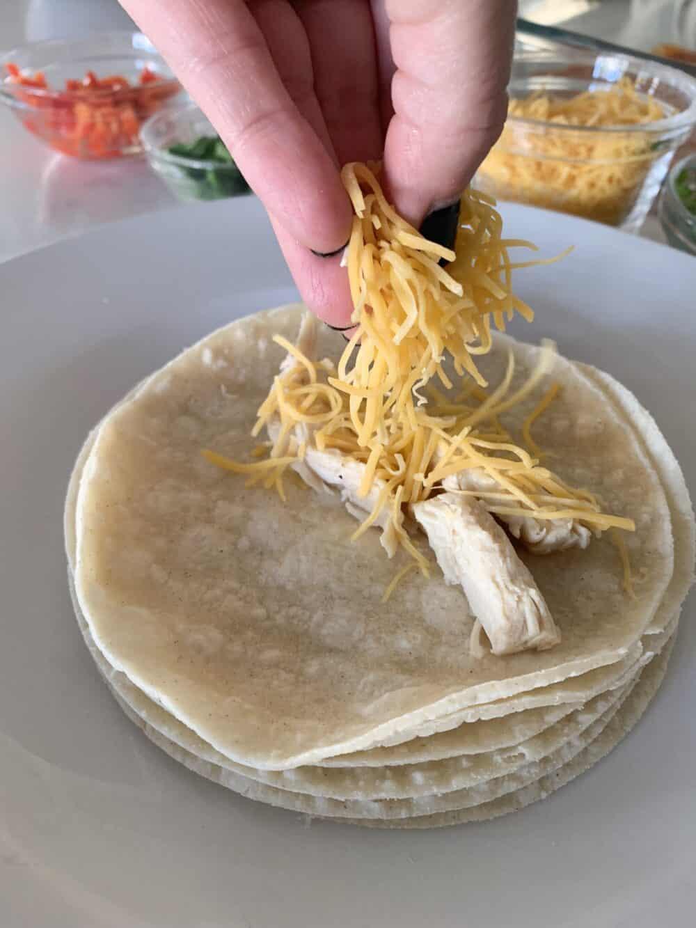 adding filling to tortillas for chicken enchiladas